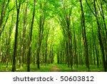 green forest | Shutterstock . vector #50603812