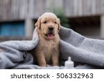 Stock photo the little puppy golden retriever 506332963