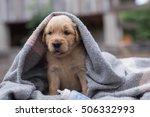 Stock photo the little puppy golden retriever 506332993