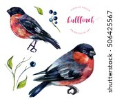 watercolor bullfinches and... | Shutterstock . vector #506425567