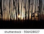 sunset through stalks | Shutterstock . vector #506428027