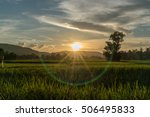 Rice Field Farm With Lens Flar...