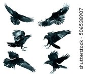 bird   flying common ravens ... | Shutterstock . vector #506538907