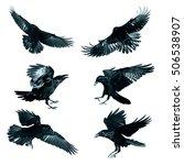Bird   Flying Common Ravens ...