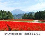 Salvia Field Tottori Hanakairo...
