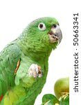 Small photo of Mealy Amazon parrot (Amazona farinosa) with a fruits eating of a white background