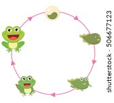 the life cycle of frog vector...   Shutterstock .eps vector #506677123