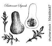 vector hand drawn butternut... | Shutterstock .eps vector #506686687