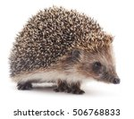 small hedgehog isolated on a... | Shutterstock . vector #506768833