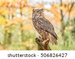 Great Horned Owl In The Woods...