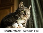 domestic young male cat with... | Shutterstock . vector #506834143