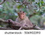 the bonnet macaque is a macaque ... | Shutterstock . vector #506902393