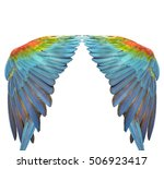 beautiful macaw feathers ... | Shutterstock . vector #506923417