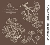 collection of ginkgo  ginkgo... | Shutterstock .eps vector #506939647