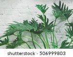 Green Plants Leaf On White Wal...
