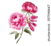 branch of pink peonies isolated ... | Shutterstock . vector #507048667