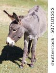 Portrait Of A Donkey On The...