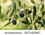 branch of olive tree with... | Shutterstock . vector #507163987
