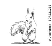 Sketch Of Squirrel Hand Drawn...