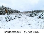landscape of winter forest with ... | Shutterstock . vector #507356533