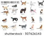 vector breed cats icons set.... | Shutterstock .eps vector #507626143