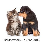 Stock photo puppy and kitten looking at each other isolated on white background 507650083