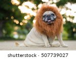 funny face of pug dog with lion ... | Shutterstock . vector #507739027