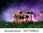 Small Poisonous Mushrooms...