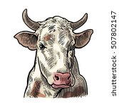 cows head. hand drawn in a...