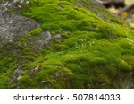 Gray Stone With Green Moss...
