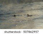 Silhouettes Of Two Ducks In Th...