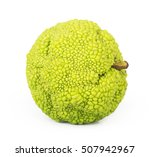 Small photo of Adam's apple isolated on white background. maclura