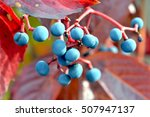 closeup of colorful leaves and... | Shutterstock . vector #507947137