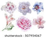 Stock photo set with flowers rose alstroemeria hibiscus watercolor illustration hand drawn 507954067