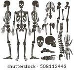 Human Bones Skeleton Dark Blac...