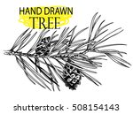 a branch of a cedar. medicinal ... | Shutterstock .eps vector #508154143