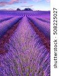 lavender field summer sunset... | Shutterstock . vector #508225027