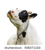 funny cute cow isolated on... | Shutterstock . vector #508371103