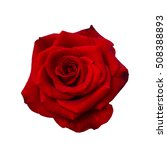 Stock photo dark red rose isolated on a white background 508388893