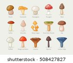 different kinds of mushrooms | Shutterstock .eps vector #508427827