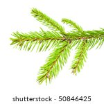 x mas tree branch | Shutterstock . vector #50846425