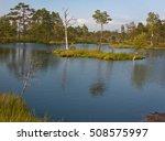Estonian Swamp In Summer Time