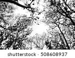 leafless branches isolated on... | Shutterstock . vector #508608937