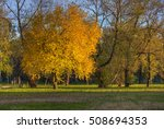 yellow tree in city park in... | Shutterstock . vector #508694353