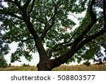 a tree in the park | Shutterstock . vector #508803577