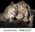 Frontal Portrait Of Two Lion...