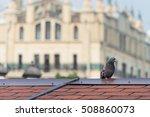 grey city pigeon standing on... | Shutterstock . vector #508860073