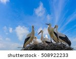 Stork With Baby Birds In The...
