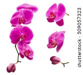 orchids isolated  multiple... | Shutterstock . vector #509057323