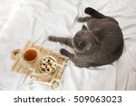 dietary breakfast | Shutterstock . vector #509063023